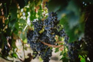 L'importanza del clima per la maturazione delle nostre uve