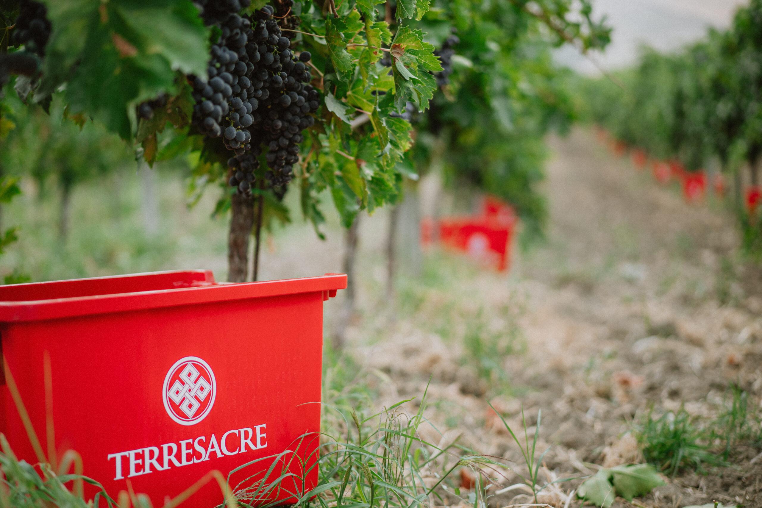 Da cosa dipende il colore del vino? Sfatiamo qualche mito!
